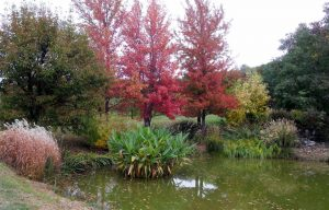 Jardin du bois Maquis à Vernioz